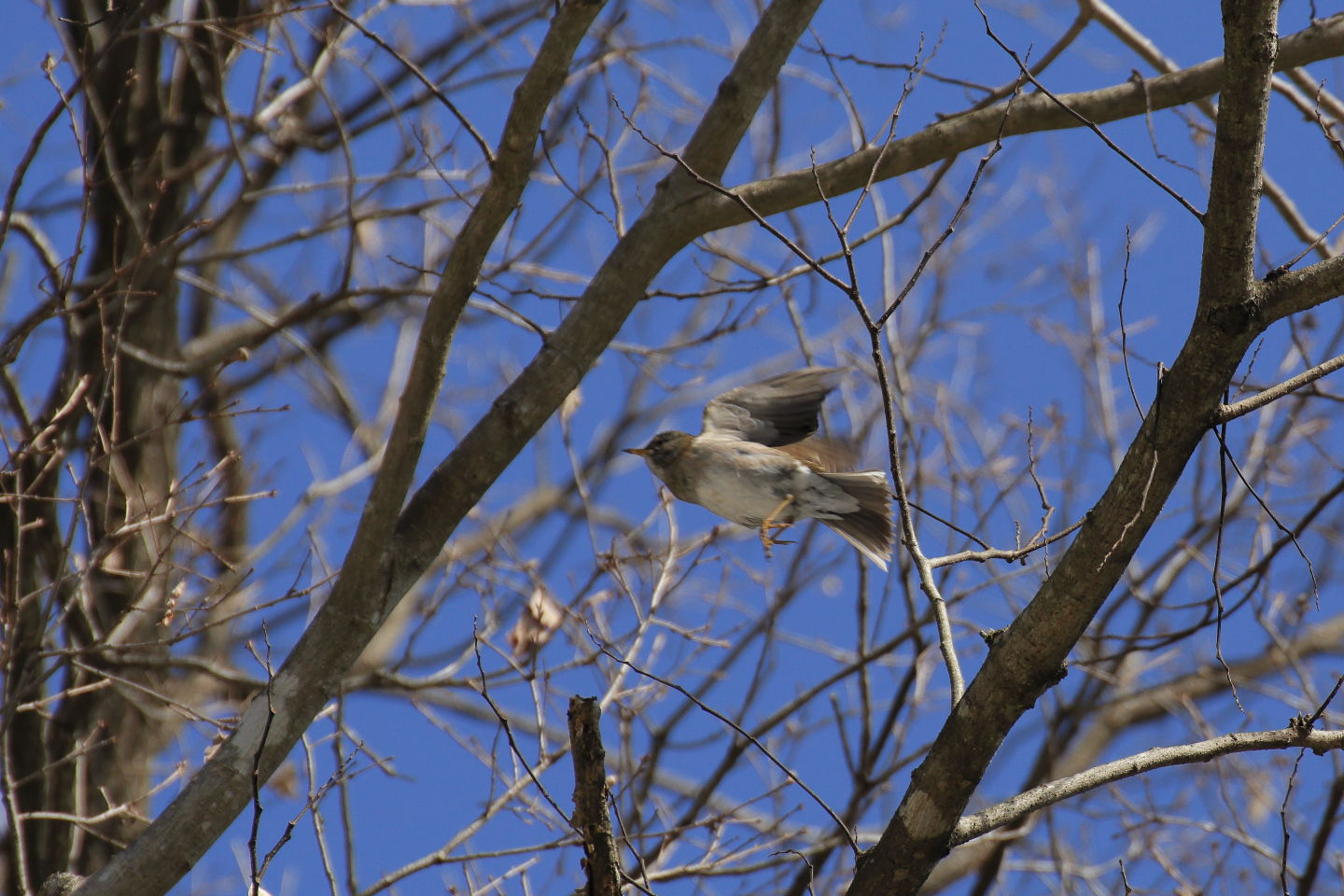Canon EOS 6D + TAMRON SP 70-300mm F/4-5.6 Di VC USD (A005)